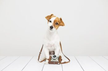 Couple's Dog Acts as their Wedding Videographer