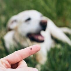 How to Prevent and Remove Ticks in Your Dog