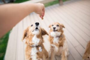 How to Keep Your Dog's Joints Healthy
