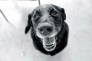 Compassionate Ways to Take Care of Your Senior Dog