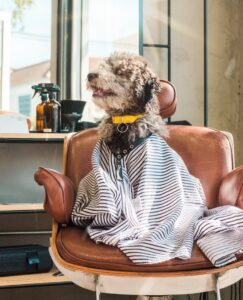 Dog Looks Fetching after Cute Fluffy Groom