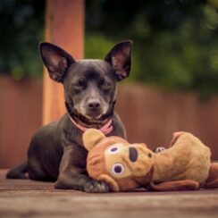 Photographs of Dog Toys Shed Light on Canine Behavior