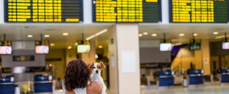 Useful Tips to Fly with Your Dog