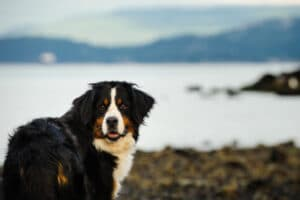 Top 10 cold weather dog breeds