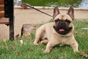 Top 10 Dog Breeds for Elderly people