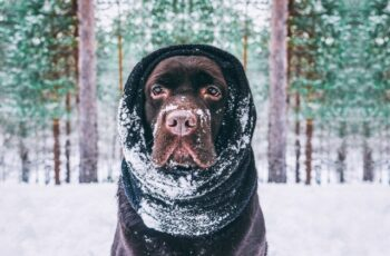 best cold weather dog breeds